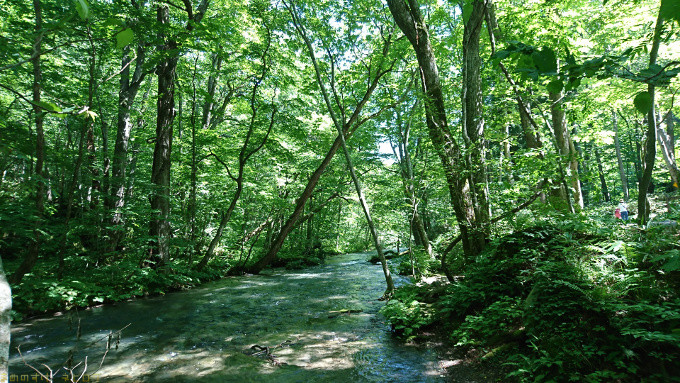 奥入瀬渓流で見てほしい渓流ポイントを3つ紹介